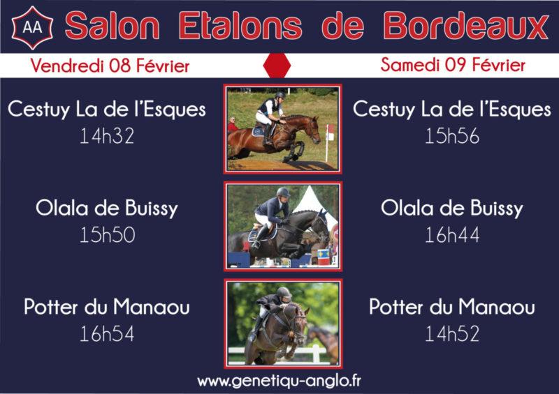 Ne ratez pas les étalons Génétiqu'Anglo au Salon des Etalons de Bordeaux !