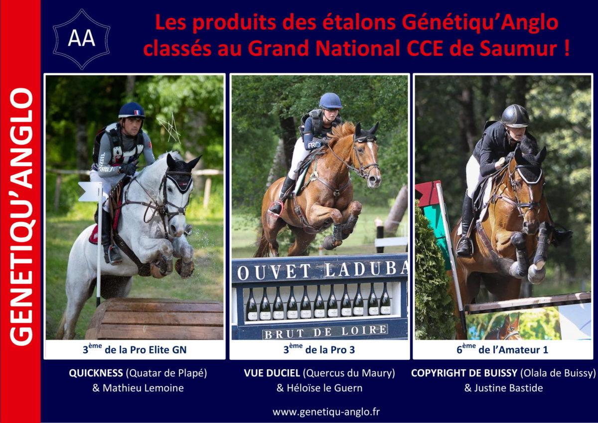 Les produits des étalons Génétiqu'Anglo se classent au Grand National CCE de Saumur !