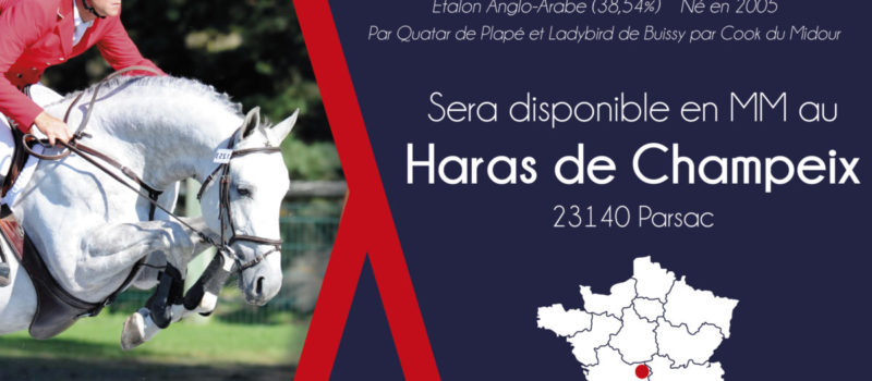 ROCK'N ROLL ANIMAL sera disponible au Haras de Champeix (23) en 2020 !